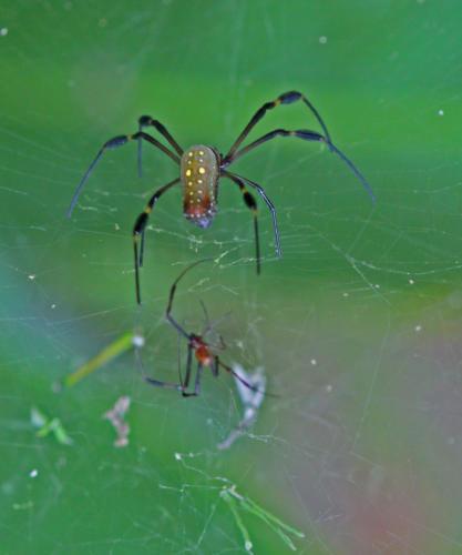 spiderx2